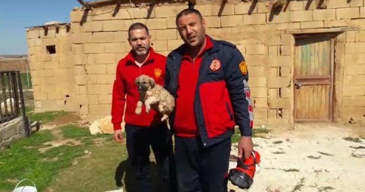 Şanlıurfa'da 30 metrelik kuyuya düşen köpek kurtarıldı