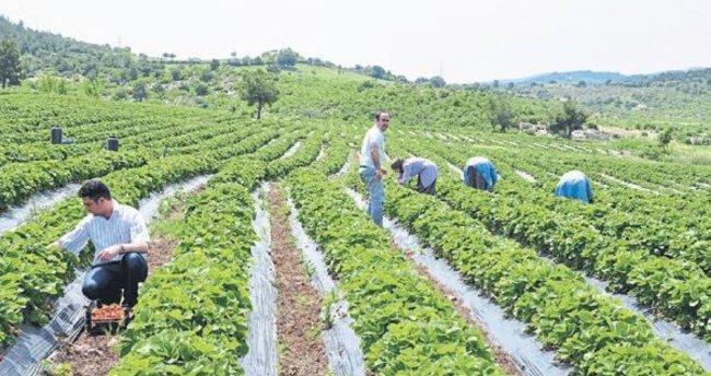 Organik tarım Manisa'da artıyor