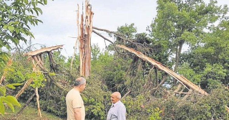 Yıldırım düşen ağaç parçalandı