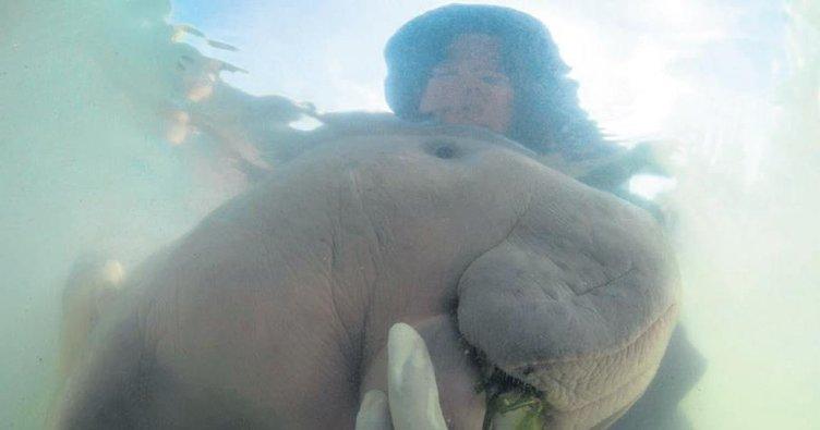 Ünlü deniz ineğini plastik öldürdü