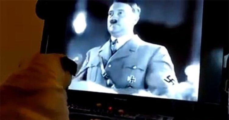 Köpeğe Nazi selamı öğretince...