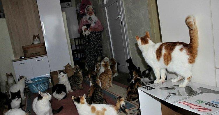 Nuriye Teyze'den 58 kediye kış bakımı