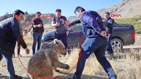 Bitlis'te Nemrut Krater Gölü yakınlarındaki ayılarla ilgili uyarı