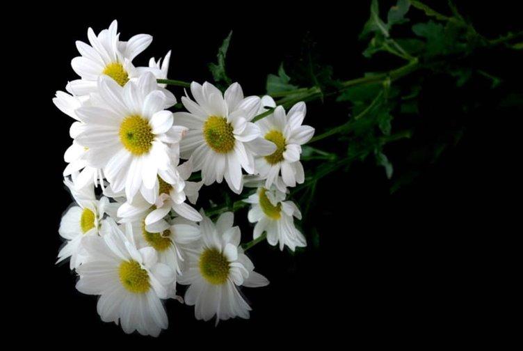 yağmurlu çiçek gifleri ile ilgili görsel sonucu
