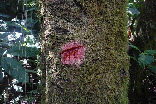 Kan ağlayan ağaç her derde deva