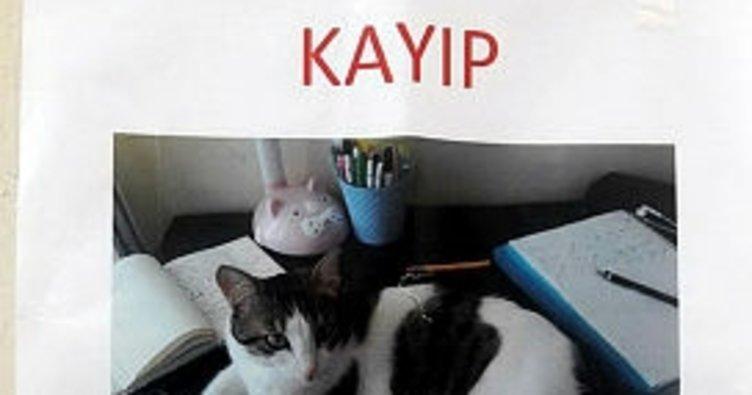 Kaybolan kedi için 'kayıp' ilanı
