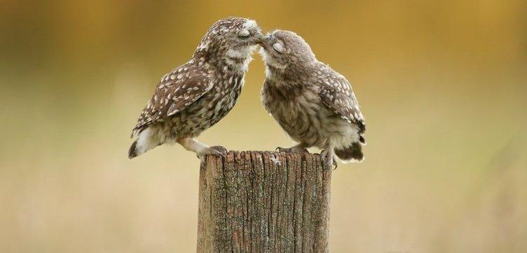 Hayvanlar aleminin aşıkları