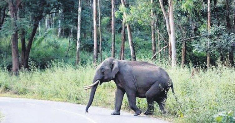 Fotoğrafçıyı filler ezdi