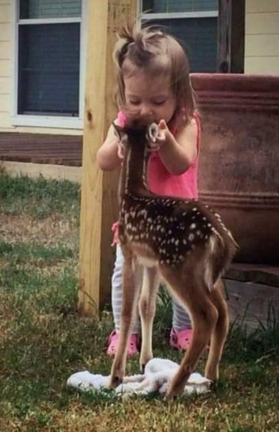 Dünyanın en şirin hayvanları