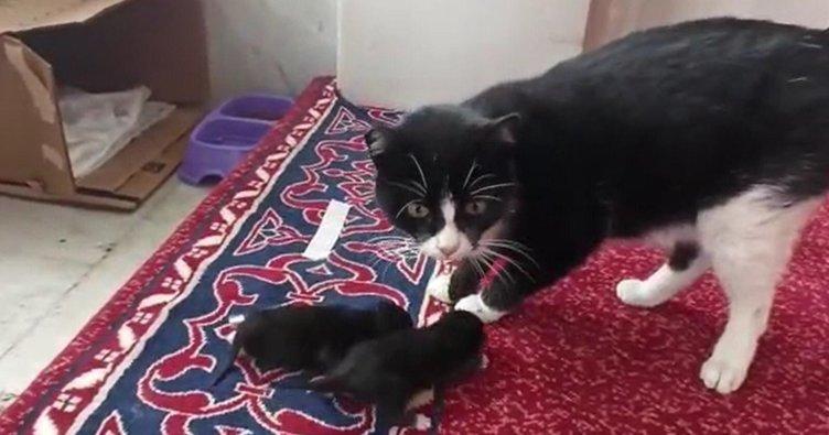Camide doğan kedilere cemaat sahip çıktı
