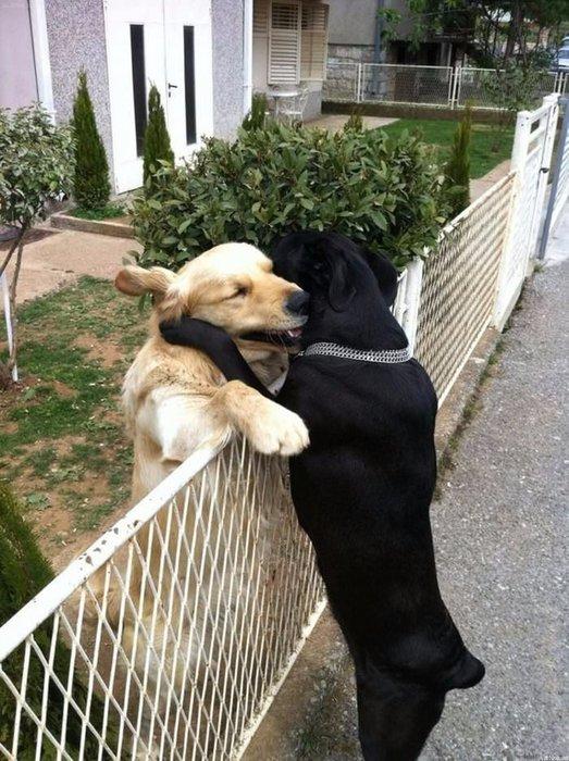 Hayvanların mutlu kareleri