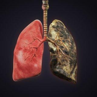 Akciğeri temizleyen süper besin!