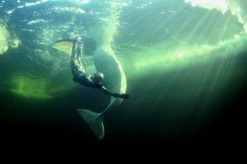 Balinaların prensesi