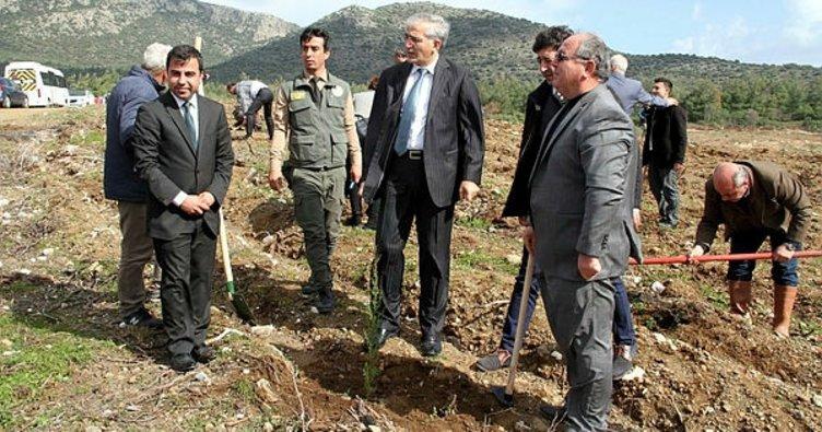 Datça'da geçen yıl yanan alanlar Afrin şehitleri anısına yeniden ağaçlandırıldı