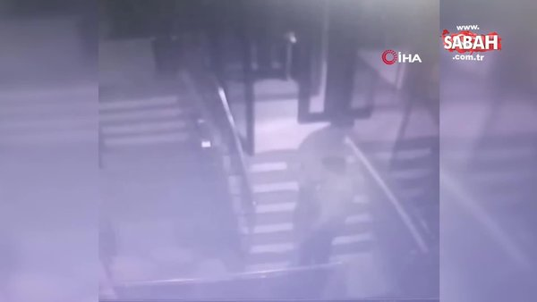 Pitbull'la fabrika bekçisine dehşeti yaşattılar | Video