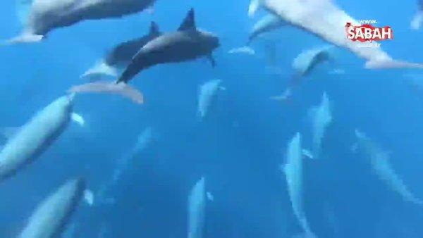 Yunuslarla yüzmek muhteşem değil mi?