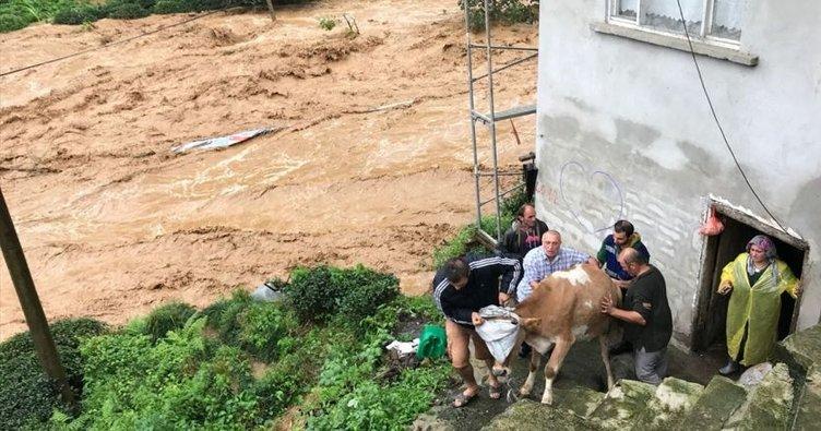 Rize'deki şiddetli yağış