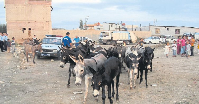 At, eşek eti kesenlere adli kontrolle tahliye