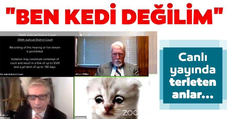 ABD'de avukatın görüntülü görüşme ile imtihanı: 'Ben kedi değilim'