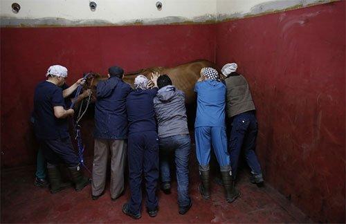 Atların hayat bulduğu yer