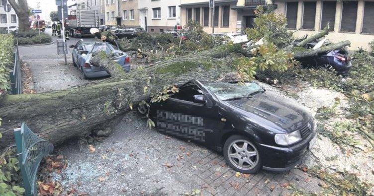 Dev ağaç dalı caddeye düştü