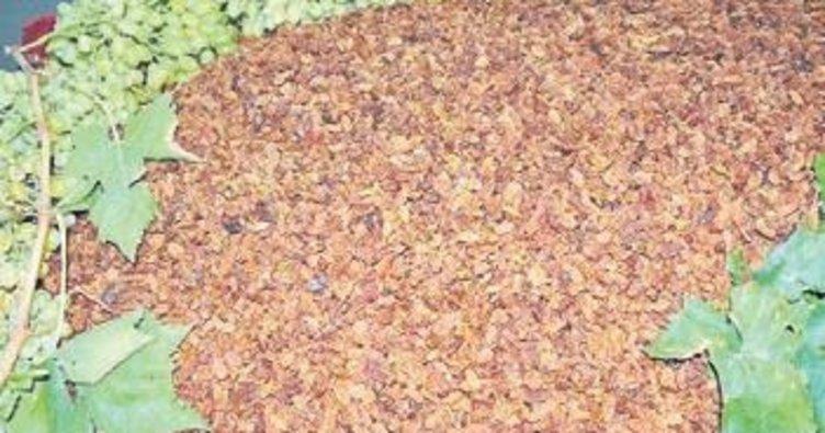 Kuru üzümde ihracat rekoru