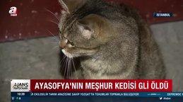 Son dakika! Ayasofya Camii'nin kedisi Gli neden öldü? Ayasofya'nın kedisi Gli'nin yürek yakan son anları kamerada... | Video