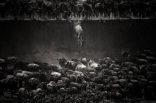 2014 National Geographic fotoğraf yarışması sonuçlandı