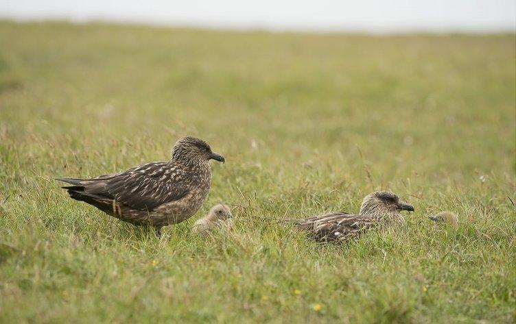 Ölümcül kuş kavgaları