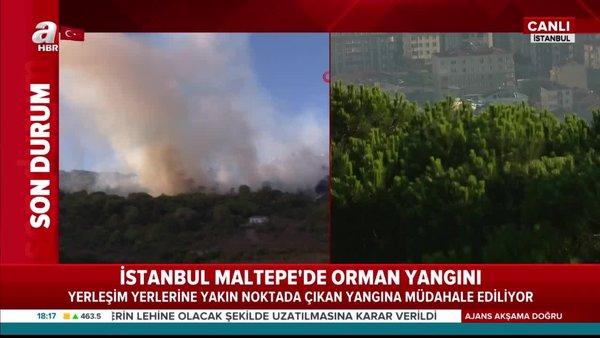 Son dakika! İstanbul Maltepe'de ormanlık alanda yangın | Video
