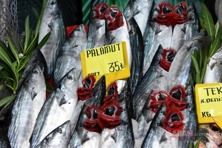 Palamut ve Lüfer fiyatları şaşırttı!