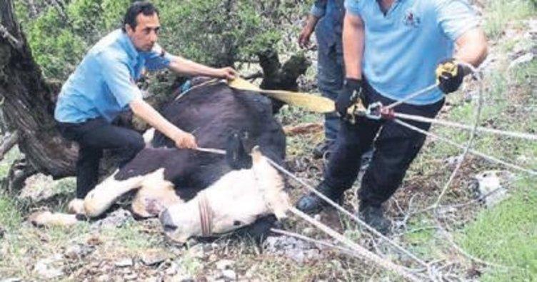 Uçurumdan düşen inek kurtarıldı