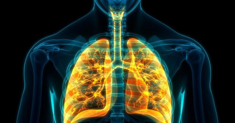 Akciğer nerede, görevleri nelerdir? Akciğer vücudun neresinde?