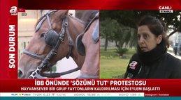 İBBönünde atlı fayton protestosu: Hayvanseverler çadırlarda sabahladı!