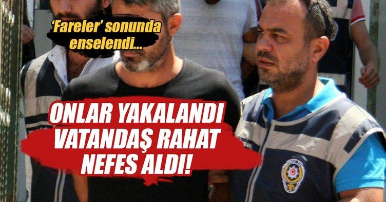 Antalya'da balkon fareleri tutuklandı