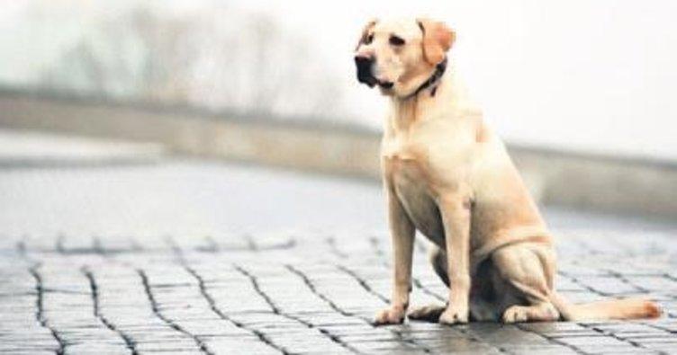 Sokak hayvanları için umut Meclis'te