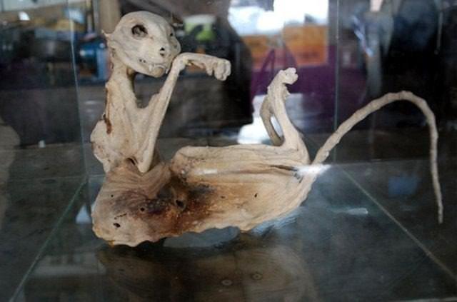 Türü bilinmeyen hayvan iskeleti