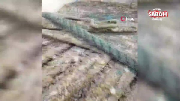 Marmaris açıklarında bulunan heykelin baş kısmı için dalış yapılacak | Video