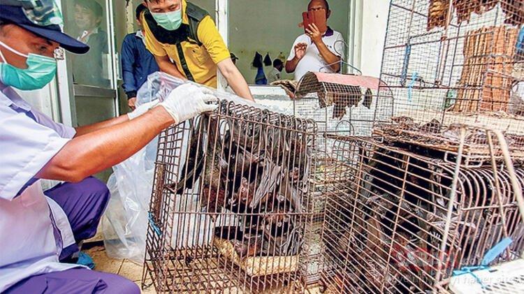 Son dakika: Çin vahşi hayvan yemesinler diye vatandaşlarına para ödeyecek!