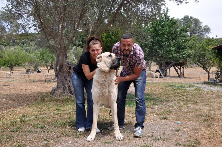 İstanbul'dan kaçıp köpek çiftliği kurdular!