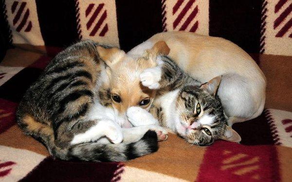Kedi ile köpeğin dostluğu