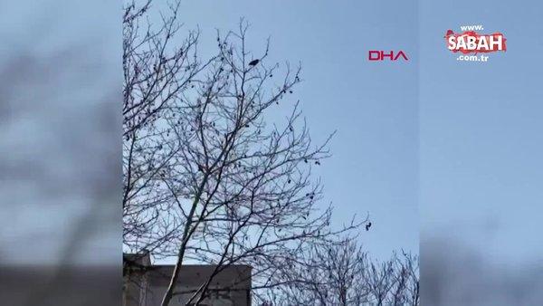 Kocaeli'de 'Allahu ekber' diyen karga kamerada | Video