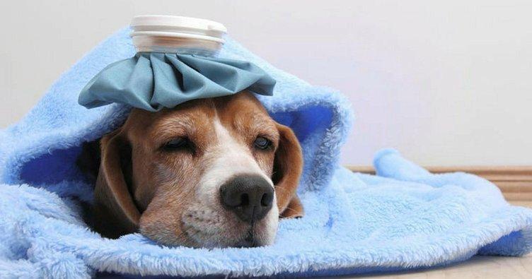 Rüyada köpek görmek: Köpek beslemek, yavrusu, havlaması görmek ne demektir?