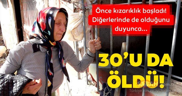 Son dakika haberi: Trabzon'da ürküten olay! 30'u da öldü