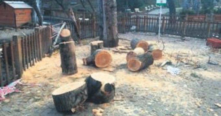 Kuğulu Park'taki ağaçlar kesildi