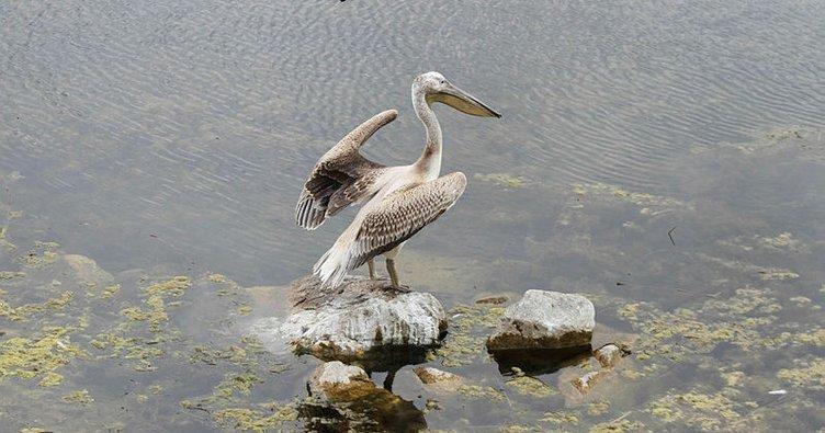 Beyşehir Gölü kuş cennetine döndü