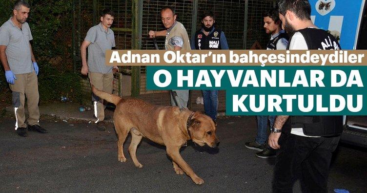 Adnan Oktar'ın bahçesindeki hayvanlar barınağa gönderildi