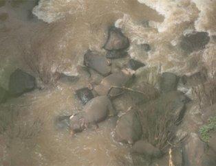 Tayland'da feci görüntüler! Bebek fil şelaleye düşünce...