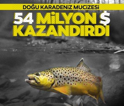 Doğu Karadeniz'den 8 ayda 54,5 milyon dolarlık alabalık ihraç edildi