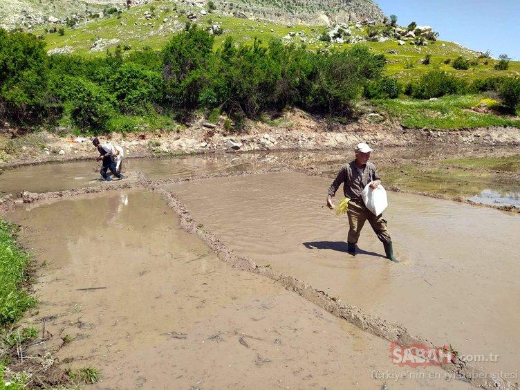 300 yıllık yöntemle tarım yapıyorlar! Teknoloji kullanmıyorlar çünkü...